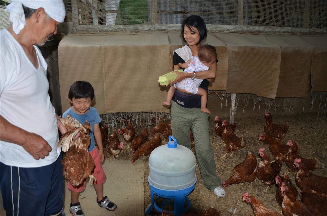 鶏の世話体験 Farming Experience - Taking Care of Chicken
